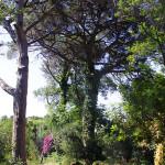 pineta ischia