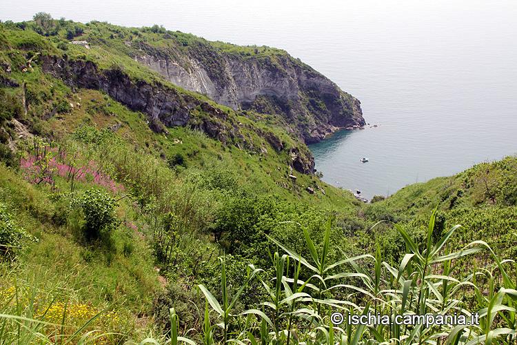 Ischia e l'incanto di Piano Liguori