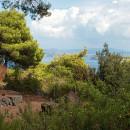 La Pineta di Fiaiano. Il cappello verde di Ischia