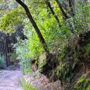 Il Bosco della Maddalena