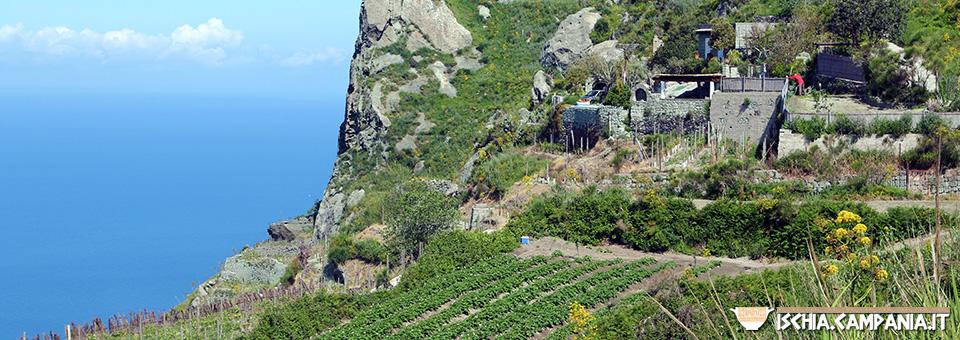 Alla scoperta di Merecoppe, la parte alta dell'isola d'Ischia