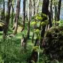 Il bosco dei Frassitelli