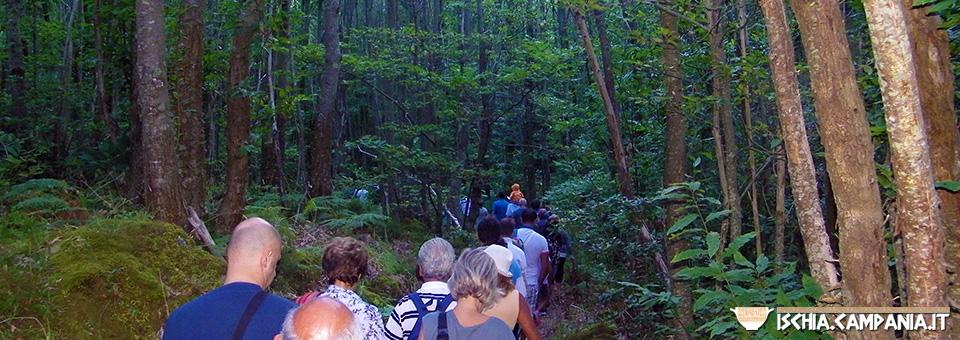Escursioni a Ischia: Ferragosto alla Falanga