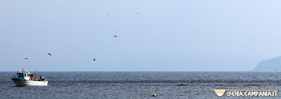 I pescatori dell'isola d'Ischia