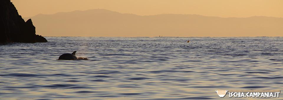 Ischia, summer island