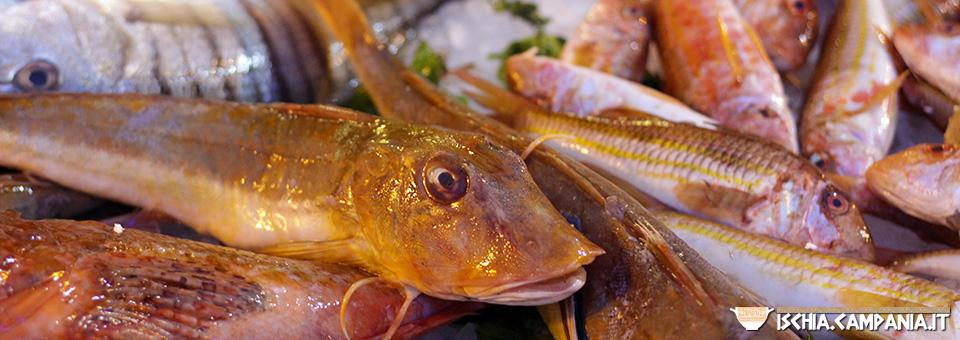 La festa della benedizione dei pesci a Forio