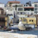 Ponte di Ognissanti a Ischia: consigli per una vacanza perfetta