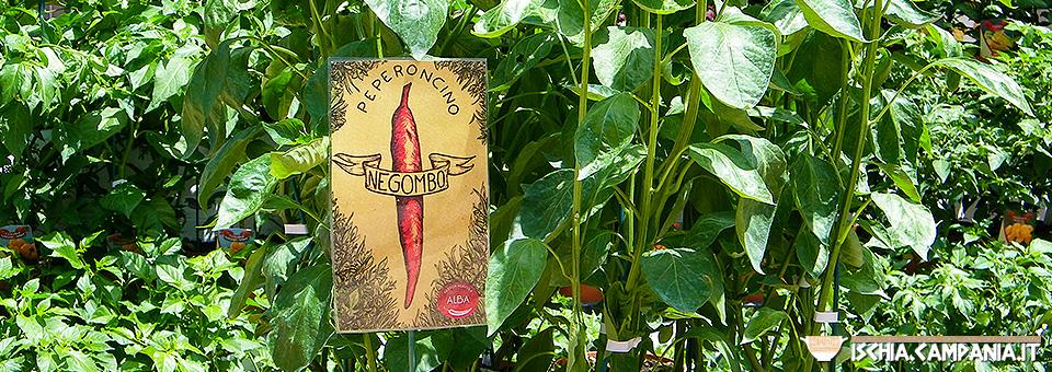 """Ischia Green: """"Ipomea"""" mostra mercato di piante rare al Negombo"""