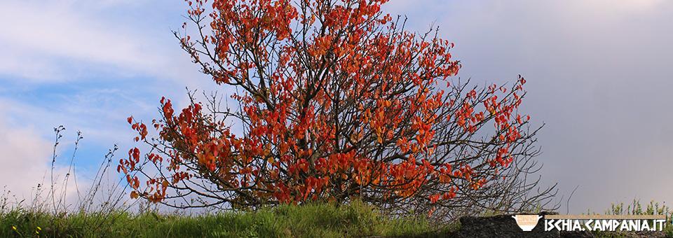 I colori dell'autunno a Ischia