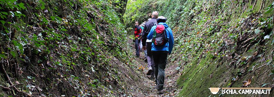 Escursione Bosco della Maddalena – Sant'Angelo: Ischia attraversata da nord a sud