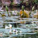Visita invernale ai Giardini La Mortella