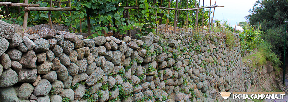 Le parracine dell'isola d'Ischia