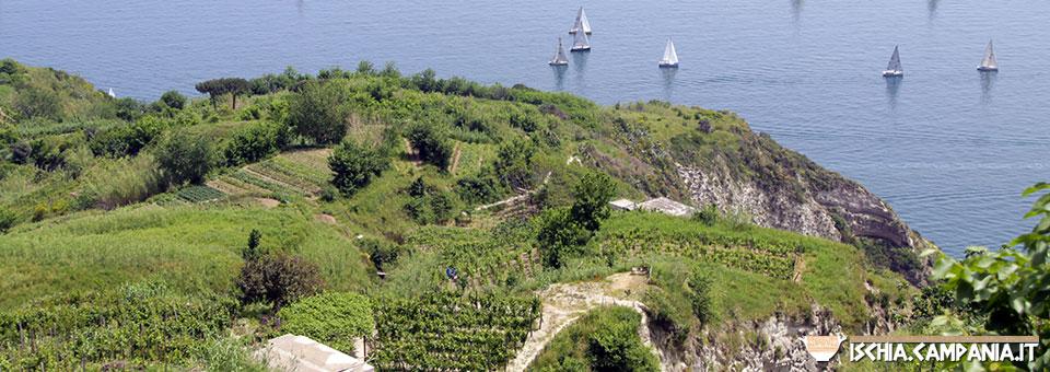I paesaggi terrazzati dell'isola d'Ischia