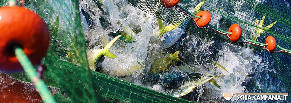 La pesca alle lampughe sull'isola d'Ischia