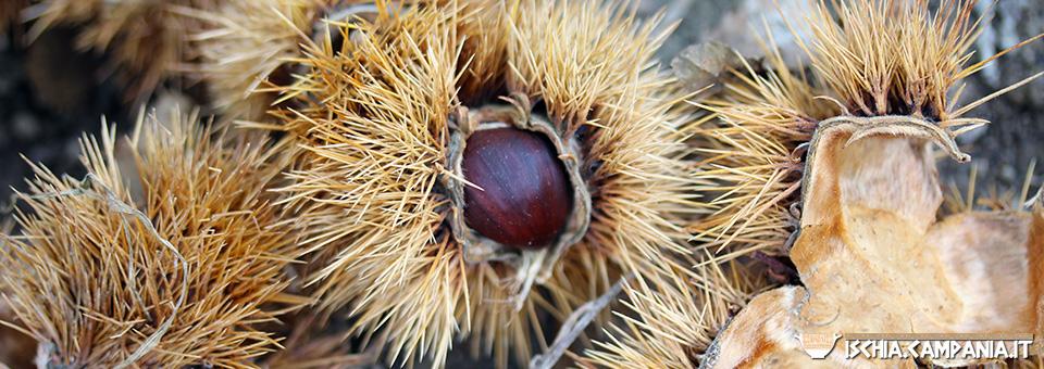 Ischia e le castagne: una gustosa scoperta